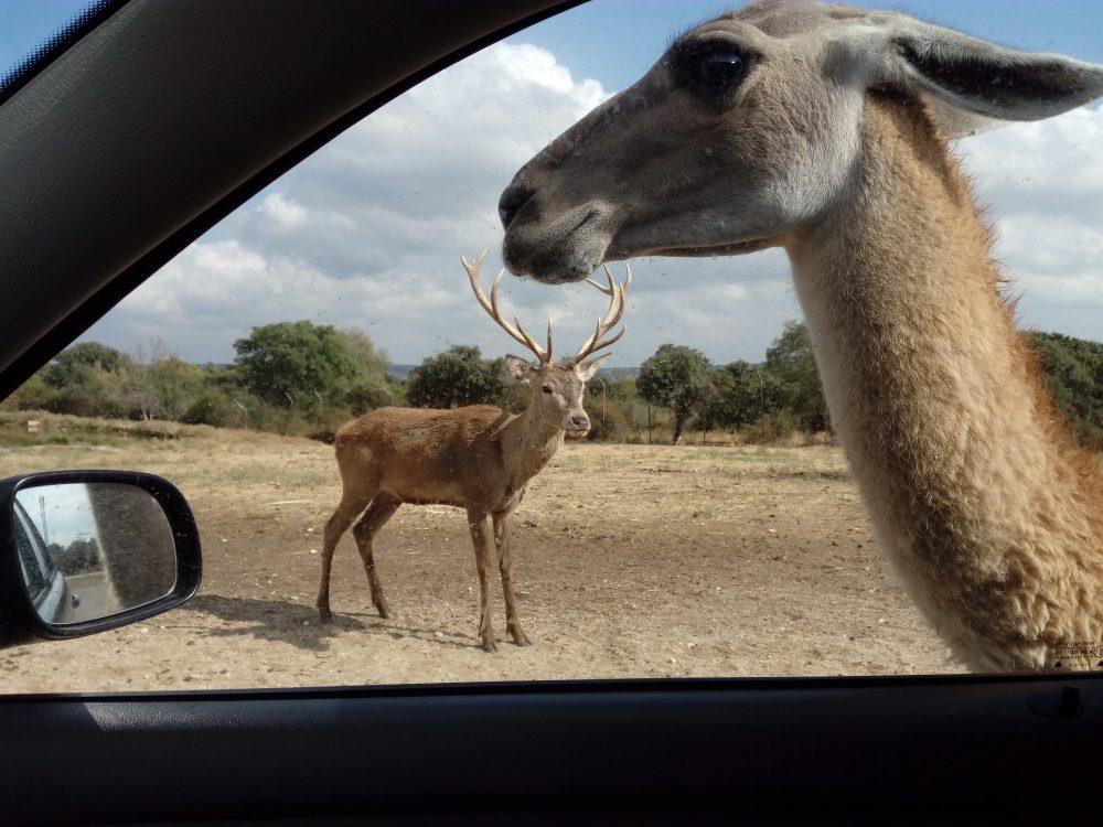 En este momento estás viendo Safari de Madrid en Aldea del Fresno.