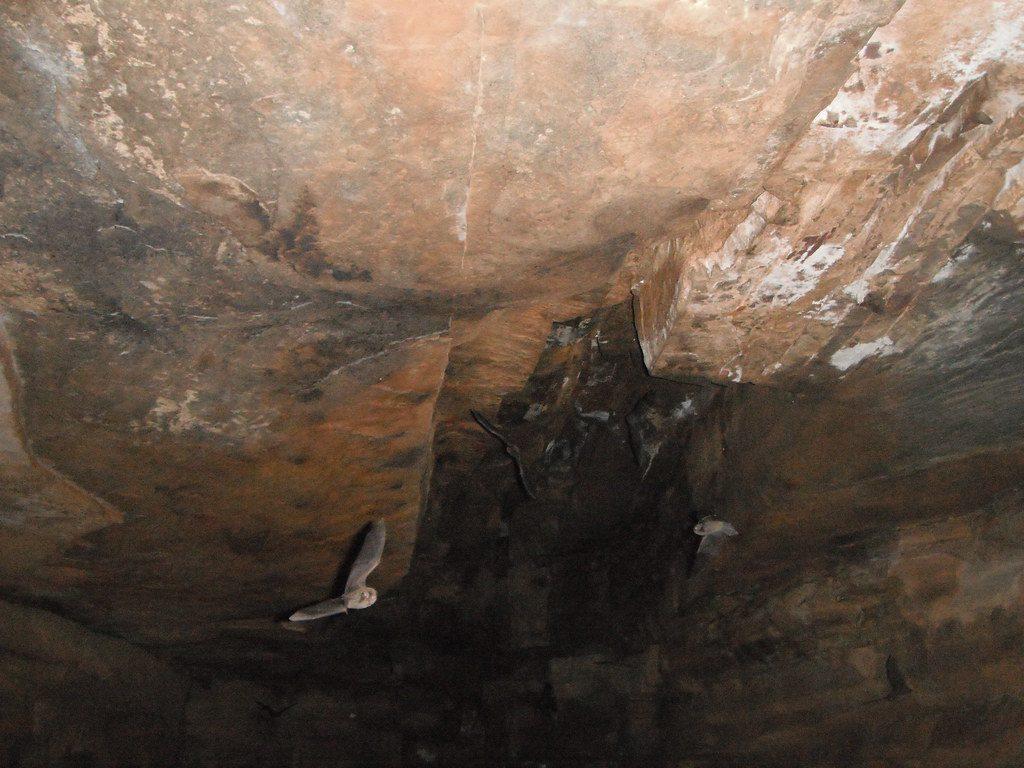 Cueva de Lloviu
